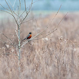 Robin Country by Fon Denton