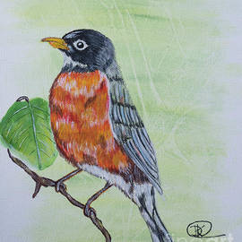 Robin  by Deborah Klubertanz