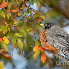 Robin in Autumn by Bonnie Barry