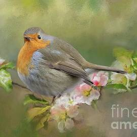 Robin Redbreast in Spring by Eva Lechner