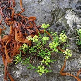 Rock Samphire and Seaweed in the Rain by Mark Haynes