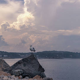 Rockport Harbor MA Seagull by Michael Saunders