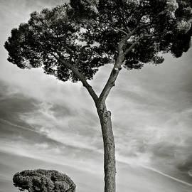 Roman Forum Trees by Dave Bowman