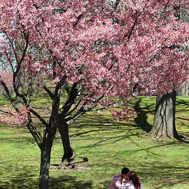 Romantic Picnic Under the Cherry Blossom Tree by Allen Beatty
