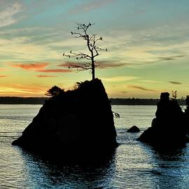 Roosting Cormorants by Beautiful Oregon