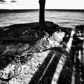 Rooted  by Marianne Campolongo