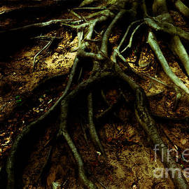 Roots of Darkness by Chris Bee Photography