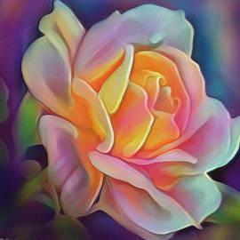 Rose by Marco Ciarciaglino