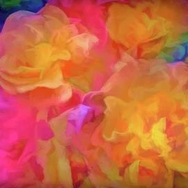 Rose 281 by Pamela Cooper