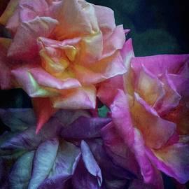 Rose 409 by Pamela Cooper