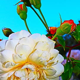 Rose and Buds Glory by Loretta S