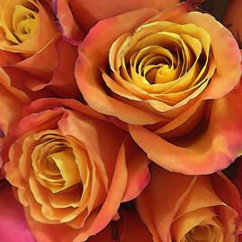 Rose Bouquet Stylized by Maria Keady