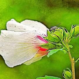 Rose Bug by Carmen Macuga