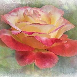 Rose, Diana Princess of Wales by Gary McJimsey