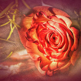 Rose Eclectic by Jim Love