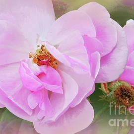 Rose Garden Summer Dreaming by Regina Geoghan