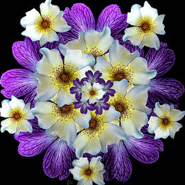 Rose Geranium Mandala by Teresa Wilson