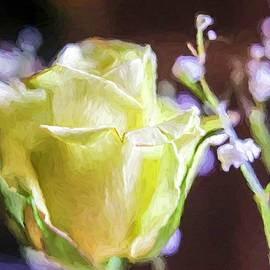 Rose Glow ... by Judy Foote-Belleci