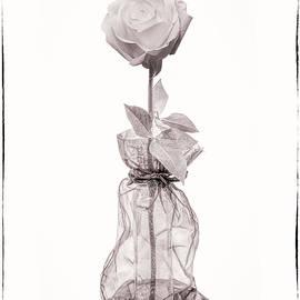 Rose in a Bag by Sandi Kroll