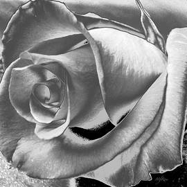 Rose in black white and grey by Maureen Rose