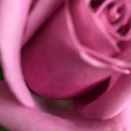 Rose in Pink by MC Mintz