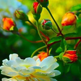 Rose Joy by Loretta S