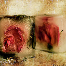 Roses in ice cubes by Rita Di Lalla