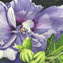Rose of Sharon by Bonnie Young