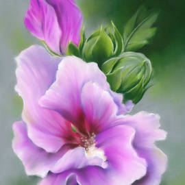 Rose of Sharon Flower and Buds by MM Anderson