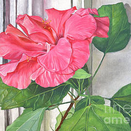 ROSE OF SHARON Hibiscus by window by Melvyn Kahan
