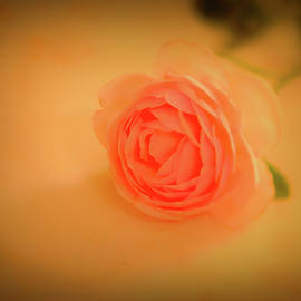 Rose on marble 2 #l2 by Leif Sohlman