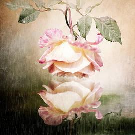 Rose Reflection by Anita Hubbard
