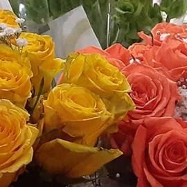 Rose Splendor  by Charlotte Gray