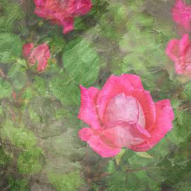 Rose Textures by Mary Lee Dereske