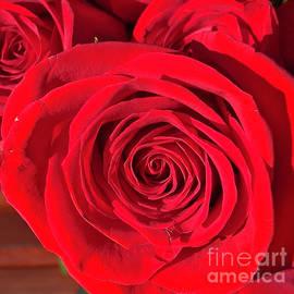 Rose Velvet by Ruth H Curtis