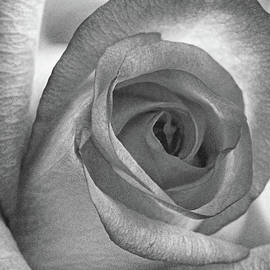 Rose Vertical Black And White by Sharon McConnell