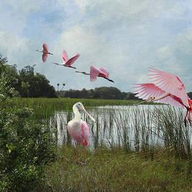 Roseate Spoonbills by Spadecaller