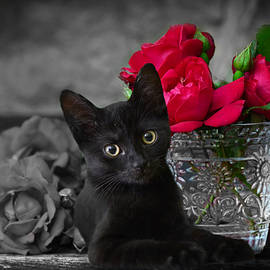 Roses and a Kitten by Ally White