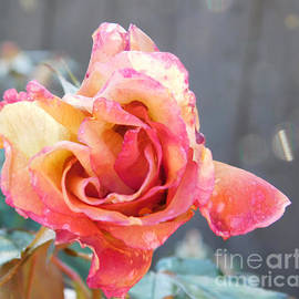 Roses and Ice by Deni Kidwell