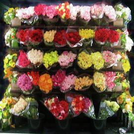 Roses in Gloom by David Zimmerman