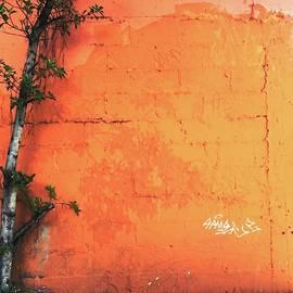 Rotten Paradise by Debora Lewis