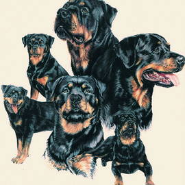 Rottweiler Montage by Barbara Keith