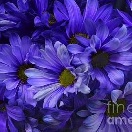 Royal Purple Majesty - Flowers of Spring by Miriam Danar