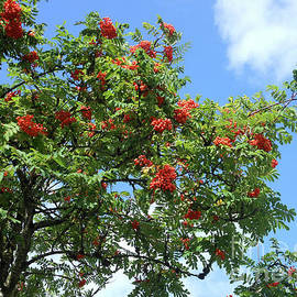 A Tree Full Of Jewels by Kathryn Jones