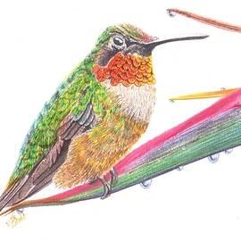 Ruby Throated Hummingbird by Swati Singh