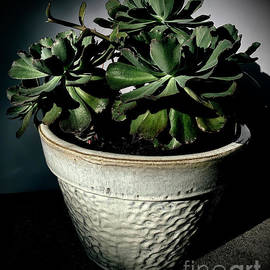 Ruffle Cactus by Luther Fine Art