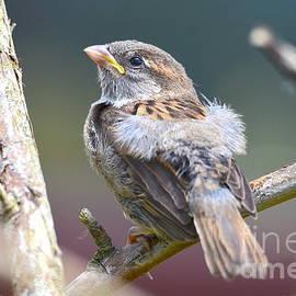 Ruffled Feathers by Carla Maloco