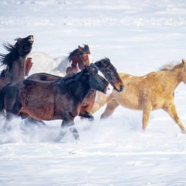 Joyous Running Horses in Snow by Judi Dressler