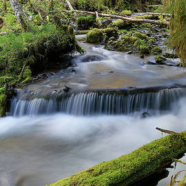 Running through the rocks and moss by Jeff Swan