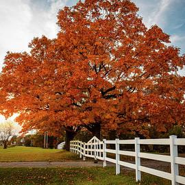 Rural Autumn Sunrise by Adam Matthews